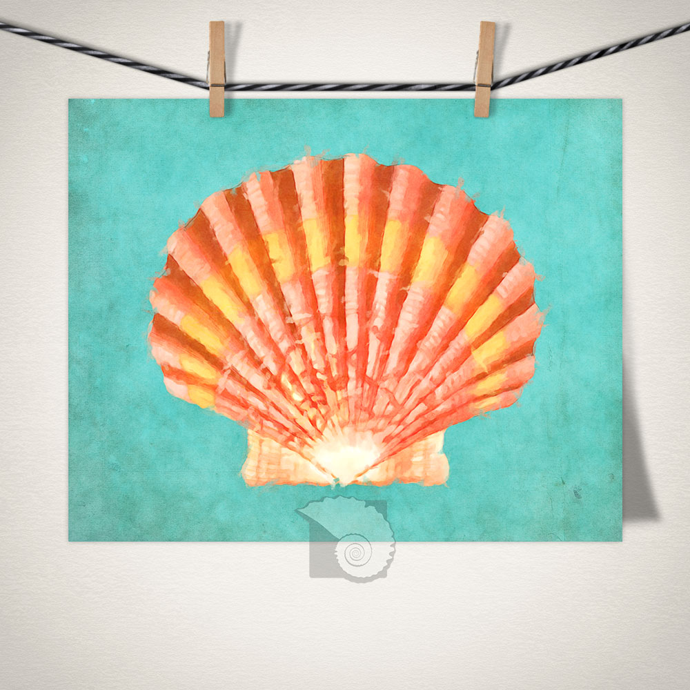 ©Peter Beckley. Scallop Shell, digital, 16 x 20 inches.